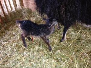 April Lamb